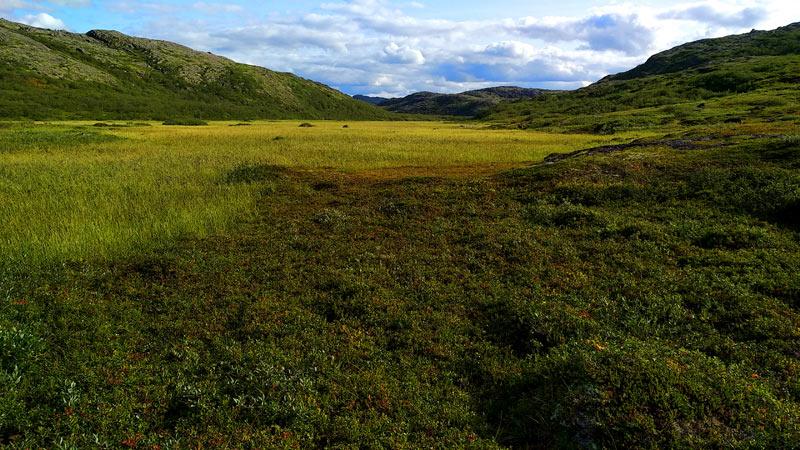 tundra1.jpg